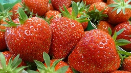 Production de fraises